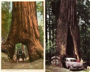 drivethru_redwood